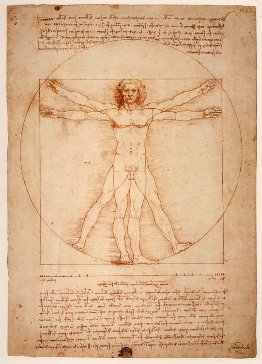 Proporțiile corpului